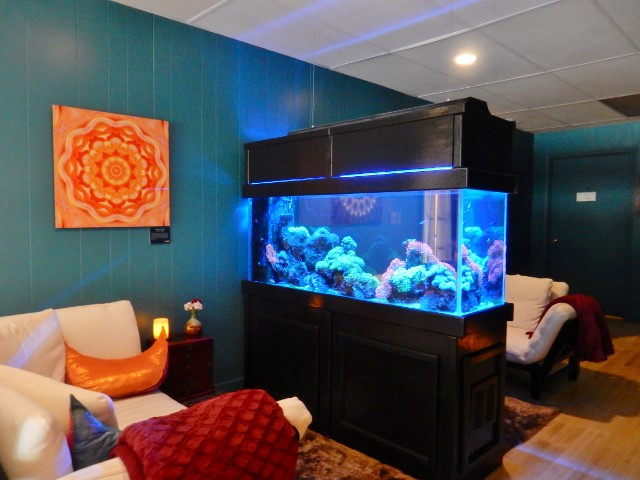 Relax at the fish tank between treatments.
