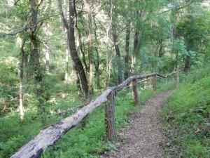 Walk the center's trails.